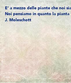 Poster: E' a mezzo delle piante che noi siamo connessi alla terra: esse sono le nostre radici, poiché per loro mezzo succhiamo dalla terra le proteine del nostro sangue e i
