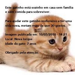 Poster: Este gatinho está sozinho em casa sem família e sem comida para sobreviver.  Para ajudar este gatinho inofensivo a ter uma vida nova, metam mais do que 30 gostos.  Imagem publicada em: 10/05/2010 -