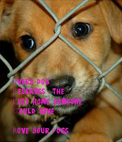 Poster: Every dog Reserves  the Best home someone Could give  Love your Dogs