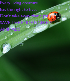 Poster: Every living creature has the right to live. Don't take away that right. SAVE THE ENDANGERED  ANIMALS!