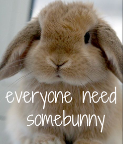 Poster:    everyone need  somebunny