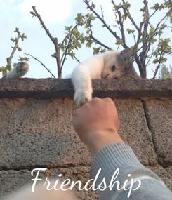 Poster:     Friendship