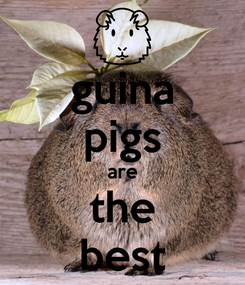 Poster: guina pigs are the best