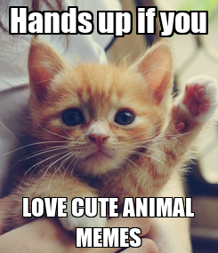 Poster: Hands up if you LOVE CUTE ANIMAL MEMES