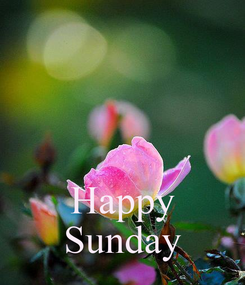 Poster:    Happy Sunday
