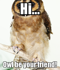 Poster: Hi... Owl be your friend!