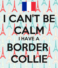 Poster: I CAN'T BE CALM I HAVE A BORDER  COLLIE