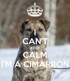 Poster: I CAN'T KEEP CALM I'M A CIMARRON