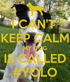 Poster: I CAN'T  KEEP CALM MY DOG IS CALLED #YOLO