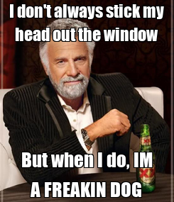 Poster: I don't always stick my head out the window But when I do, IM A FREAKIN DOG