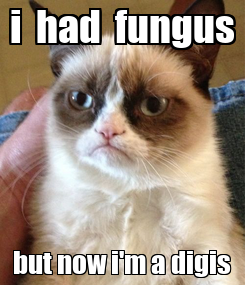 Poster: i  had  fungus but now i'm a digis