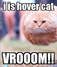 Poster: i is hover cat VROOOM!!