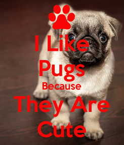 Poster: I Like Pugs Because They Are Cute
