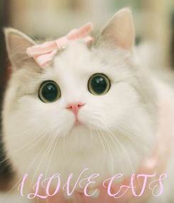 Poster: I LOVE CATS