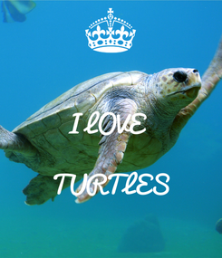 Poster:  I LOVE   TURTLES
