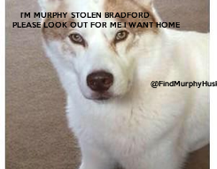 Poster:     I'M MURPHY STOLEN BRADFORD