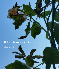 Poster:        If life shows you its thorn, shave it.