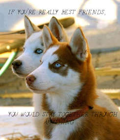 Poster: IF YOU'RE REALLY BEST FRIENDS,             YOU WOULD STAY TOGETHER THROUGH              ANYTHING