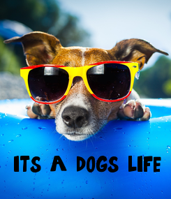Poster: it's a dog's life