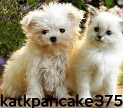 Poster:     katkpancake375