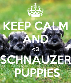 Poster: KEEP CALM AND <3 SCHNAUZER  PUPPIES