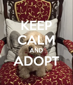 Poster: KEEP CALM AND ADOPT