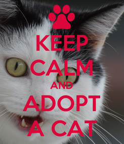Poster: KEEP CALM AND ADOPT A CAT