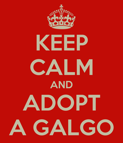 Poster: KEEP CALM AND ADOPT A GALGO