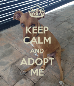 Poster: KEEP CALM AND ADOPT ME