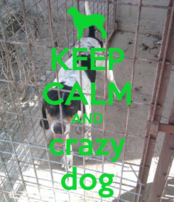 Poster: KEEP CALM AND crazy dog