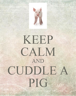 Poster: KEEP CALM AND CUDDLE A PIG