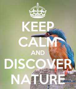 Poster: KEEP CALM AND DISCOVER NATURE