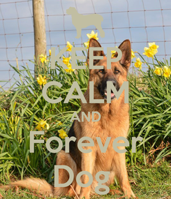 Poster: KEEP CALM AND Forever Dog