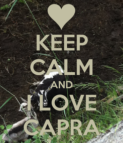 Poster: KEEP CALM AND I LOVE CAPRA