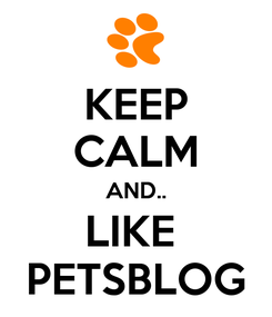 Poster: KEEP CALM AND.. LIKE  PETSBLOG