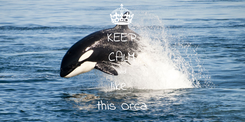 Poster: KEEP CALM and like  this Orca