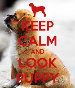 Poster: KEEP CALM AND LOOK PUPPY