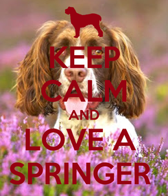 Poster: KEEP CALM AND LOVE A  SPRINGER