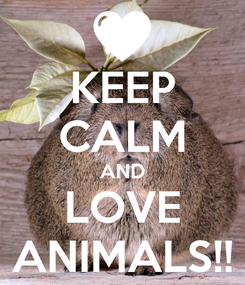 Poster: KEEP CALM AND LOVE ANIMALS!!