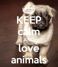 Poster: KEEP calm AND love animals