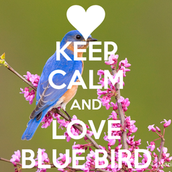 Poster: KEEP CALM AND LOVE BLUE BIRD