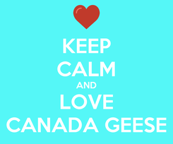 Poster: KEEP CALM AND LOVE CANADA GEESE
