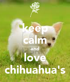 Poster: keep calm and love chihuahua's