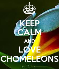 Poster: KEEP CALM AND LOVE CHOMELEONS