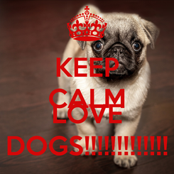 Poster: KEEP CALM AND LOVE DOGS!!!!!!!!!!!!!