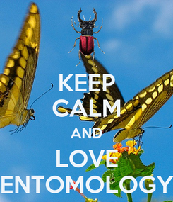 Poster: KEEP CALM AND LOVE ENTOMOLOGY