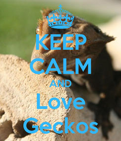 Poster: KEEP CALM AND Love Geckos