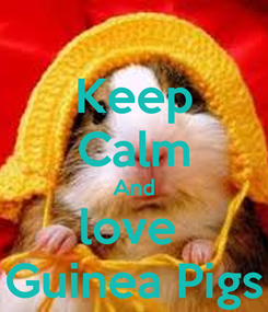 Poster: Keep Calm And love  Guinea Pigs