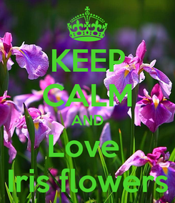 Poster: KEEP CALM AND Love  Iris flowers