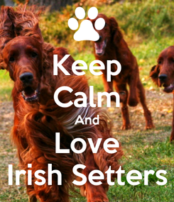 Poster: Keep Calm And Love Irish Setters